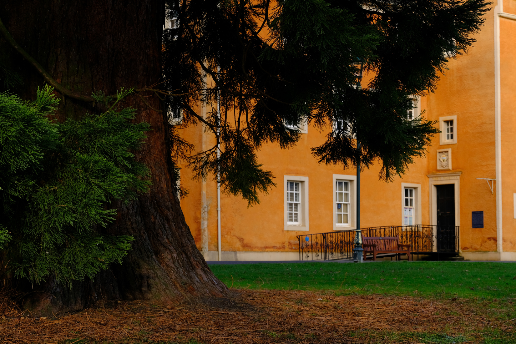 Large tree trunk in foreground and pine looking foliage. In background is orange building with small sash windows and the entrance door with ramp towards it.