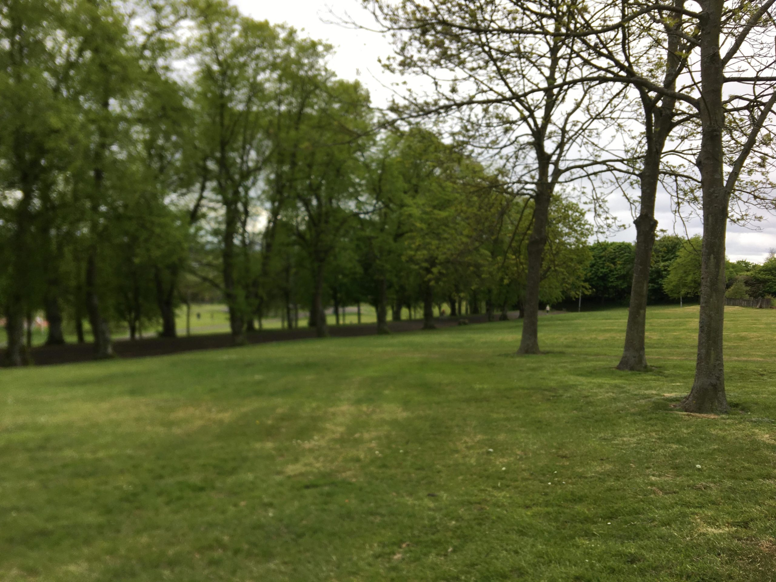 Grass on the ground, three bare trees on the right and on the left a line of gree leaved trees into the distance.