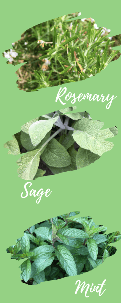 3 photos of kitchen herbs with names below Rosemary, Sage and Mint